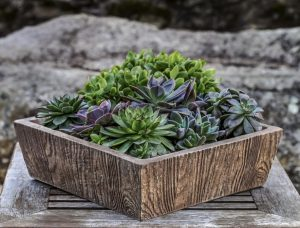 transitioning outdoor plants indoors